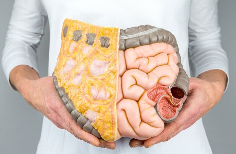 الدهون الداخلية