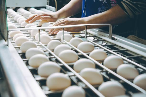 كم بيضة في اليوم للرجيم؟