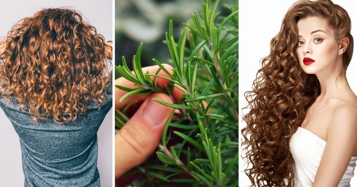 اكليل الجبل لانبات الشعر